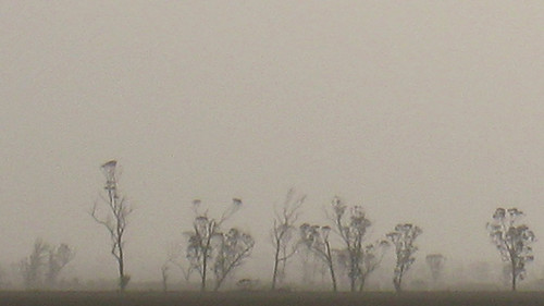 Dust storm near Mukinbudin