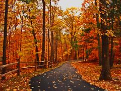 Fall Scene (LB2556) Tags: november autumn trees fall nature leaves fence colorful pennsylvania path fallcolors autumnleaves autumncolors betzwood photoaddiction landscapesofvillagesandfields streetsandroadsoftheworld lb2556 photocontesttnc10
