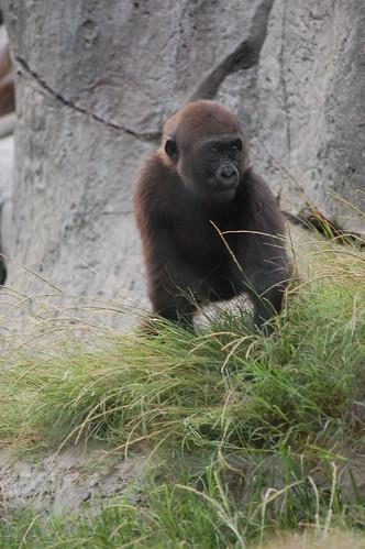 zoo 178