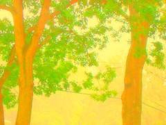 Trees in the Rain (Lynn Coulombe) Tags: trees summer rain rhodeisland rainstorm sensational cumberland finephotoshopdesign dragondaggerphoto