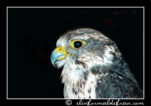 Aguila 5
