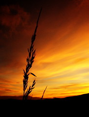 Sunset grass (The Neepster) Tags: sunset red orange nature grass silhouette aberdeenshire hills donside bej theunforgettablepictures naturessilhouettes