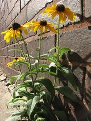 IMG_4770 (nuschu) Tags: florafauna