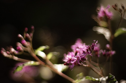 """""""I think it pisses God off if you walk by the color purple in a field somewhere and don't notice it."""""""