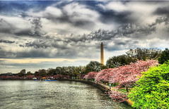Cherry Blossoms and the Monument (` Toshio ') Tags: november autumn trees orange usa lake water colors leaves america mall washingtondc dc washington pond fallcolors sidewalk washingtonmonument tidalbasin toshio popularphotography popphoto aplusphoto