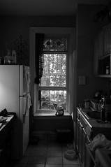 (gillianleigh) Tags: nyc newyorkcity bw baby newyork window kitchen brooklyn thomas kittens andre kitties puzz