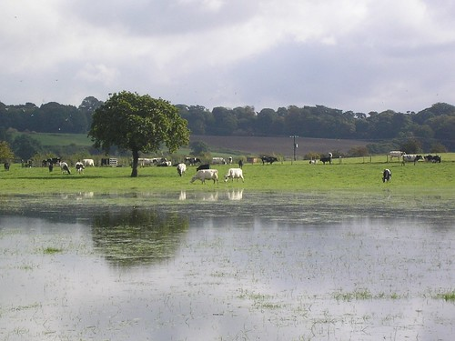 Water meadows