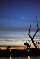 Odessa Memorial Park10 (chasqui01) Tags: sunset moon birds texas silhouettes odessa herons memorialpark eveningstar otw