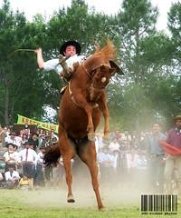 Abaixo do mau tempo (Edu Rickes) Tags: horses caballos cavalos gauchos riograndedosul tradicionalismo gacho basto montaria beautifulshots abigfave gineteada ginetes sulamerica theunforgettablepictures brazilianphotographers fotgrafosbrasileiros todososdireitosreservados fotgrafosgachos edurickes pelotasfotoclube edurickesphotos belasimagens gurupasurea bastoargentino corcoveando edurickesyahoocombredurickeshotmailcom edurickesproduesfotogrficas copyright2010 fotografiaslegais