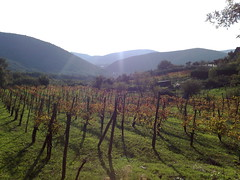 Colori d'autunno (ginozar) Tags: cameraphone italy panorama celltagged geotagged zonetag campania campagna di castel ce caserta sasso vigneto myego casteldisasso zip81013 geo:lat=411950396667 geo:long=142989003333 cell:cgi=22214089846241