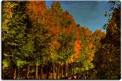 Autumn colors / Colori d'autunno (Mr.PartyHut ) Tags: autumn trees fall nature colors alberi forest woodland natura leafs autunno colori hdr bosco goldenglobe fogliame colorphotoaward montefalconeappennino proudshopper marcomatteucci
