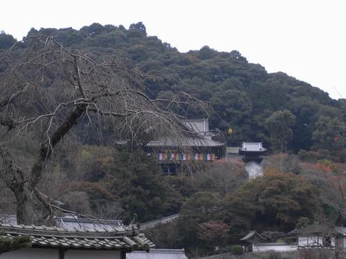 長谷寺(特別拝観)-25