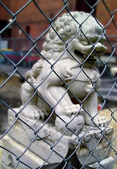 "AUSSIEMANDIUS - ""HOLDING THE LION"" (zero g) Tags: china animal statue stone fence chinatown chinese lion australia melbourne cage chainlink foo beast barrier fu bourkestreet shi eclectic myth guardian itstheendoftheworldasweknowit theapocalypse theflickys anythingeverything fireawayanythingartisticasfastasyoucan melbourneandbeyond reallyunlimited phonyanimals allthingswhite australianflickr punwithpictures stuffstuffstuff allsizesavailable"