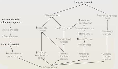 Esquema Mantenimiento de la Hemostasia, Salud 2.0