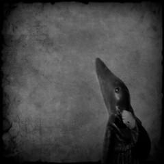 The Last Black Hood (EudaldCJ) Tags: bw album textures squareformat 2bdasest