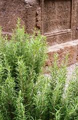 ROMAN ROM (Mount Fuji .) Tags: barcelona catalunya romanempire tomba catalua romannecropolis romancemetery imperirom necrpolisromana plaavilademadrid