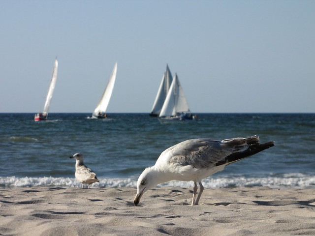 Seagull with some boats behind, by Felix Lau