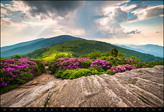 Roan Mountain Highlands Rhododendron Blooms - Jane Bald (Dave Allen Photography) Tags: pink flowers mountain mountains nature rock landscape outdoors photography nc highlands nikon tn tennessee scenic northcarolina rhododendron rays blooms sunrays appalachia blueridgemountains beams appalachiantrail daveallen lightrays blooming mountainmeadow godbeams 1735mm wnc alpinemeadow westernnorthcarolina gneiss roanmountain roundbald d700 roanhighlands rhododendronbloom platinumheartaward janebald daveallenphotography mygearandme mygearandmepremium mygearandmebronze mygearandmesilver mygearandmegold mygearandmeplatinum mygearandmediamond