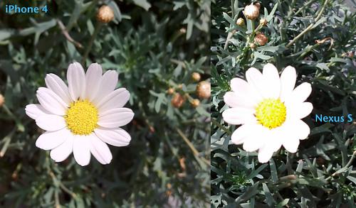 Fotovergleich iPhone 4 & Samsung Nexus S