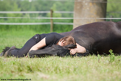 IMG_9660 (amable) Tags: horses horse holland pferd stallion andalusian buckskin paard paarden friesian hengst cruzado prance pferden tricktraining iberir