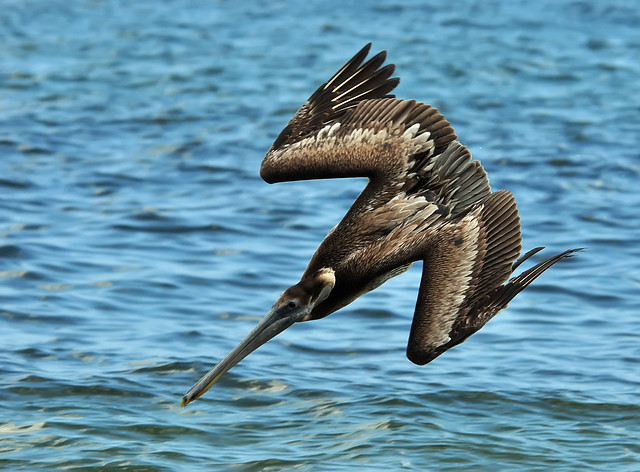 Pelican Two Diving, Boynton Beach, Florida