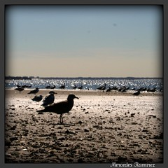 Seagulls in shadows (LifeAsIPictured) Tags: dominicana picnik countryfeelings mercedesramirezguerrero duquesam mercedesramirez studioduquesa duquesamercedes dominicanrepublicpictures lifeasipictureit
