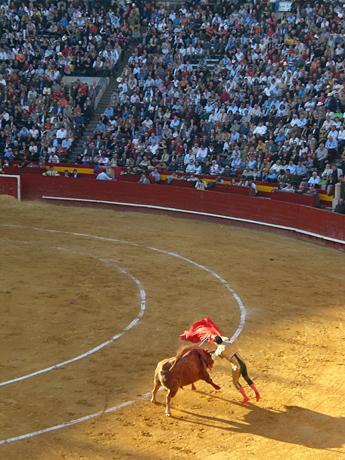 killing-the-bull