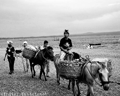 La Luz Beach, San Juan, Batangas merchant vendor horses travelling seaside basket  Buhay Pinoy Philippines Filipino Pilipino  people pictures photos life Philippinen