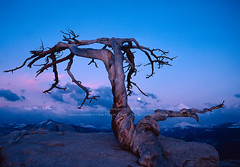 Yosemite's famous Jeffrey Pine on Sentinel Dome (Chris Falkenstein Photography & Video) Tags: yosemite jeffreypine