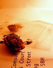 cannabis (gibffe) Tags: weed pot drugs dope cannabis marihuana wackytobacky stickyickyicky