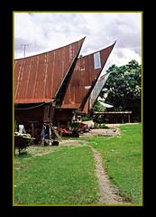 Lumban Suhi Suhi (sakit_djiwa) Tags: people batak vilage ulos