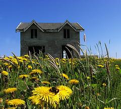 Flekkuvk - Abandoned farm (Vignir Mr) Tags: flowers house flower building abandoned home yellow fly iceland farm bee sland flekkuvk theperfectphotographer vignirmrgararsson vignirmr