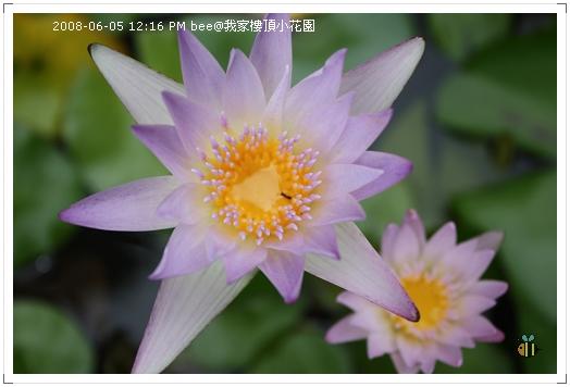 20080605@我家樓頂的小花園 (2)