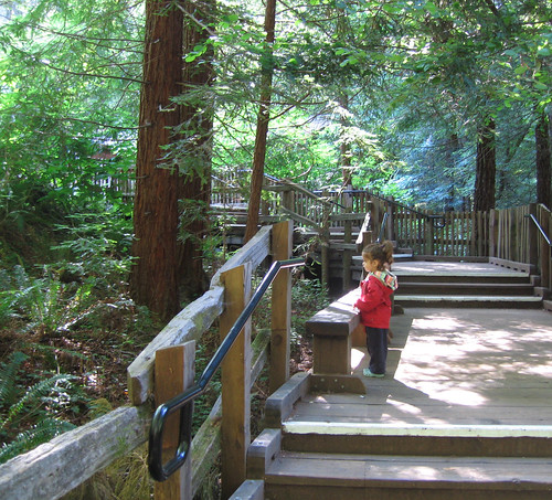 June 17 - Muir Woods - 4