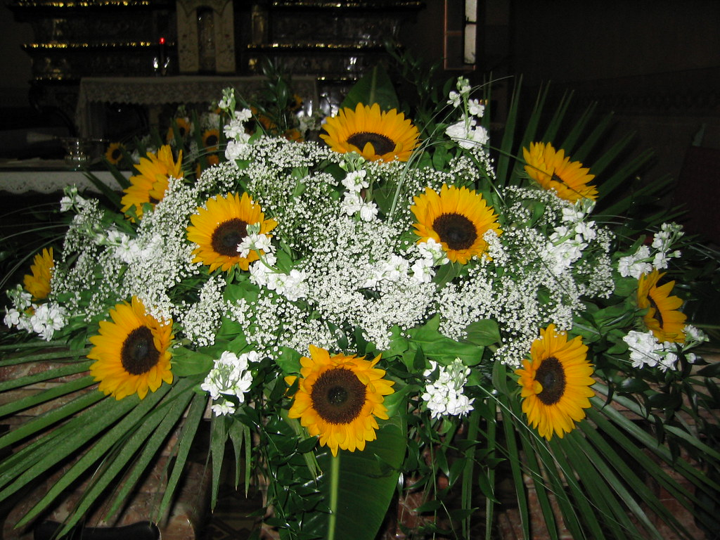 Composizioni Fiori Matrimonio Girasoli : The worlds best photos of chiesa and dieffembacchia flickr hive mind