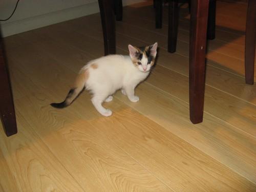 Kitty 005
