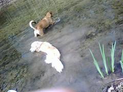 My_foster__Chance____Ravenkeeper_s_Arthur_explore_her_pond