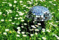Magic Mushroom (Gizmo_F) Tags: day2 mushroom daisies pad photoaday toadstool july2 magicmushroom pad2008 gizf