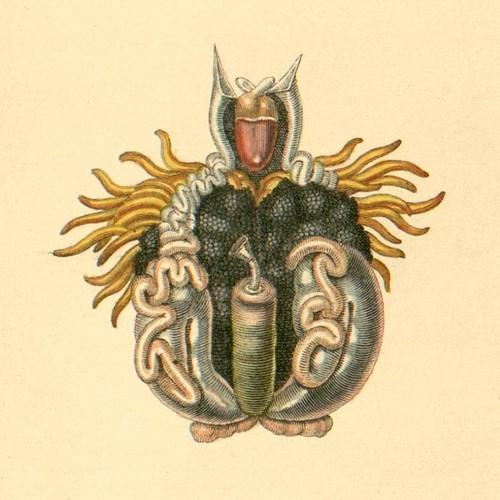 Frog internal organs a