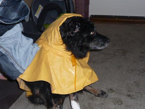 Celia Raincoat 005
