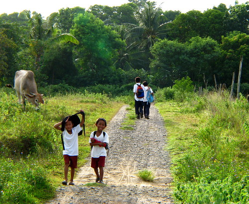 school boys commuting rural area uniform  Pinoy Filipino Pilipino Buhay  people pictures photos life Philippinen  菲律宾  菲律賓  필리핀(공화국) Philippines  cow