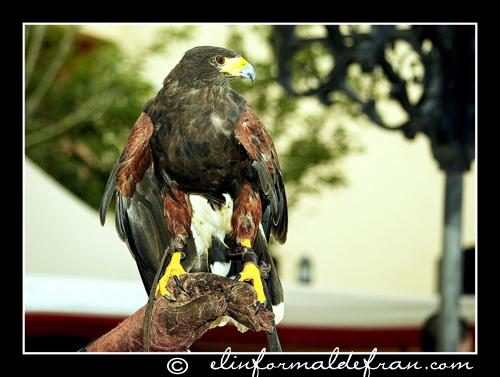 Aguila  4