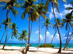 (a g n è s) Tags: blue sea sky sun tree beach water strand paradise coconut dom sable tropical caribbean plage blanc antilles caribe outremer frenchwestindies fwi mariegalante