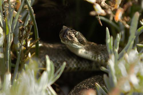 Marna's Snake II