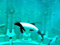 Sea World, San Diego (Beauty Hunter...) Tags: ocean sea shark dolphin