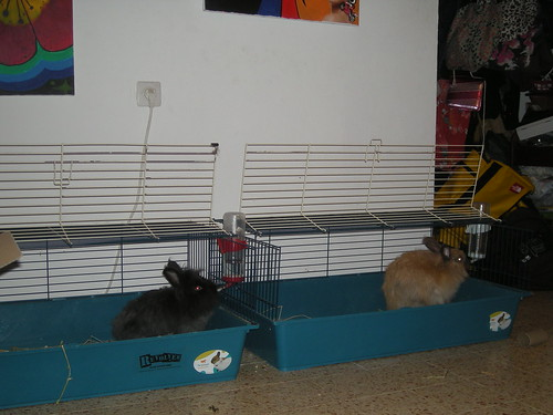 it is HAPPY HOUR here at the bunny house!