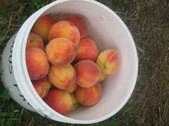 A bucket of peaches