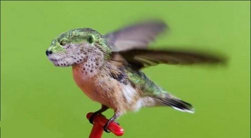 حيوانات وطيور لم تشاهدها من قبل  ( فوتوشوب ) 2823448472_af8c365555.jpg?v=0