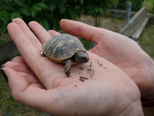 la tartarughina della signora Maria