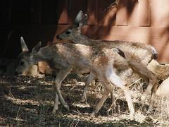 bambi & rufus